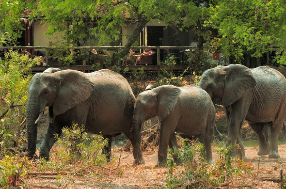 Witness unique sightings of elephant families.